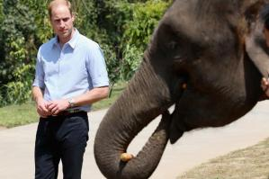 XISHUANGBANNA, CHINA - MARCH 04:  Prince William, Duke of Cambridge meets a rescued elephant called 'Ran Ran' at the Xishuangbanna Elephant Sanctuary on March 4, 2015 in Xishuangbanna, China. Prince William, Duke of Cambridge is on a four day visit to China. He is the most senior royal to visit China since the Queen and Duke of Edinburgh in 1986. His visit follows on from a successful four day visit to Japan  (Photo by Chris Jackson/Getty Images)