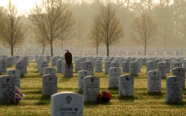 eagle-at-arlington-cemetary